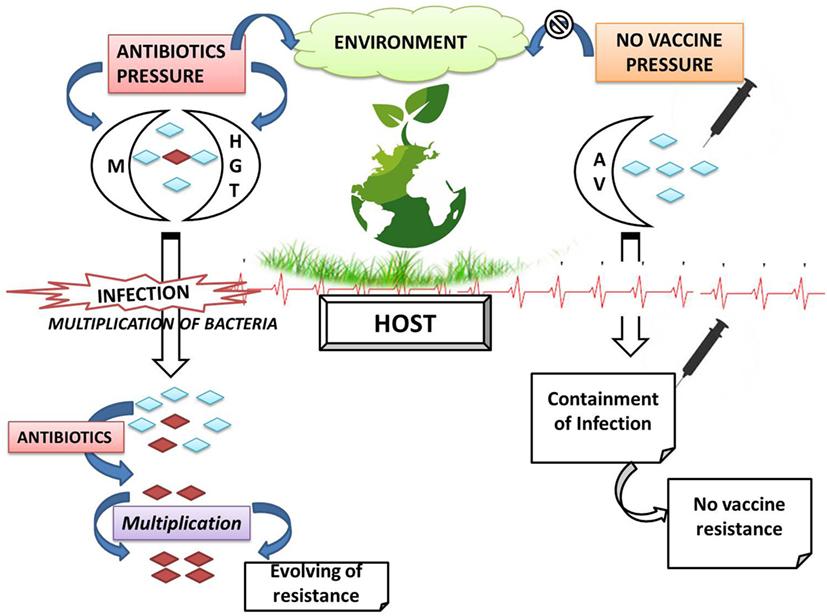 antibiotic resistance articles 2017 pdf