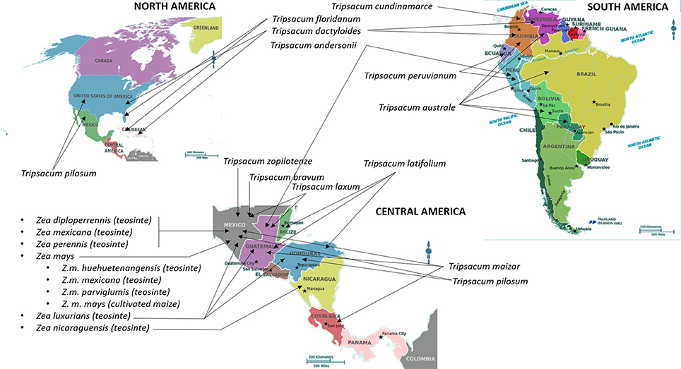 Frontiers | Wild Relatives of Maize, Rice, Cotton, and