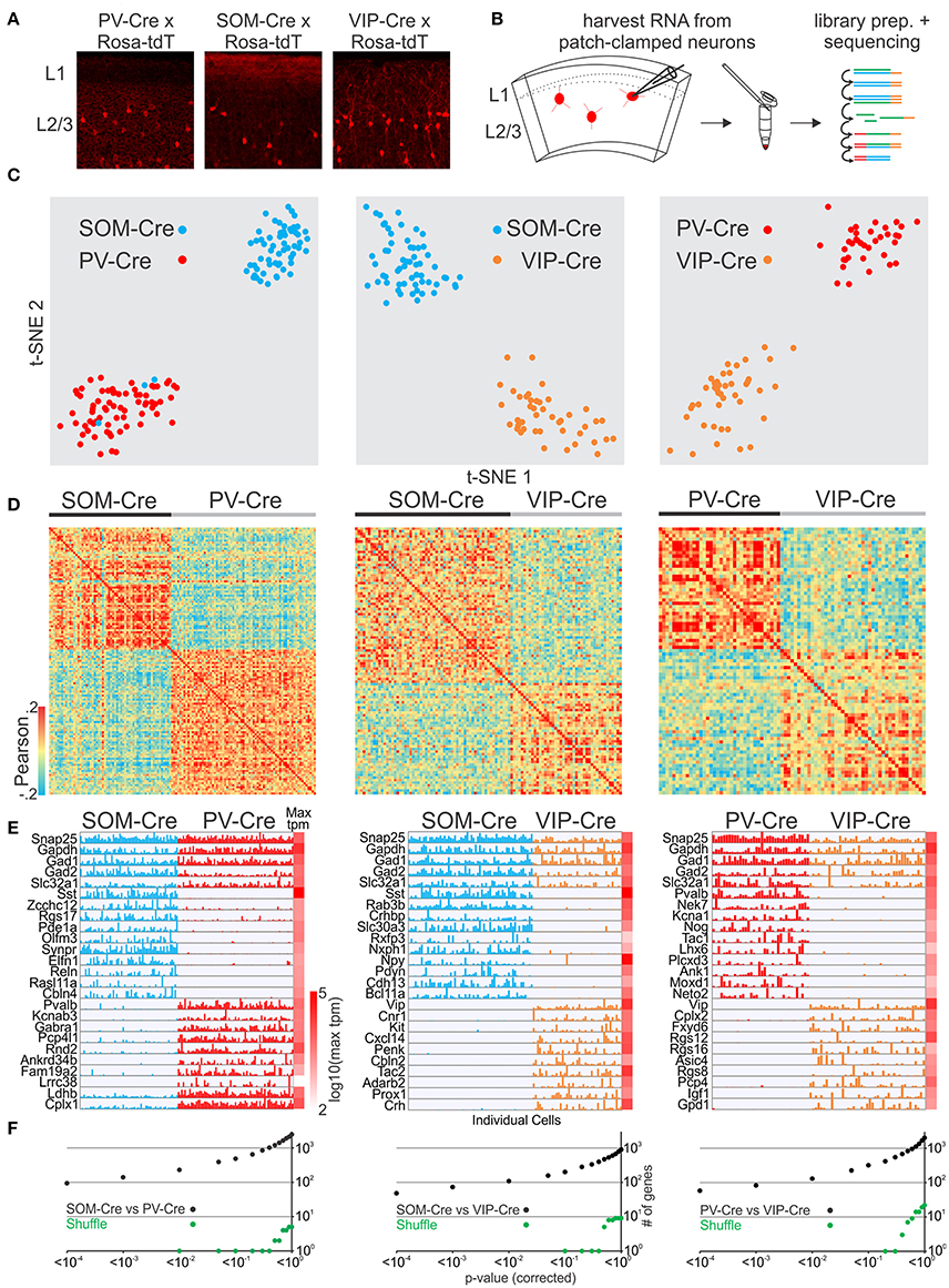Frontiers | Correlating Anatomy and Function with Gene