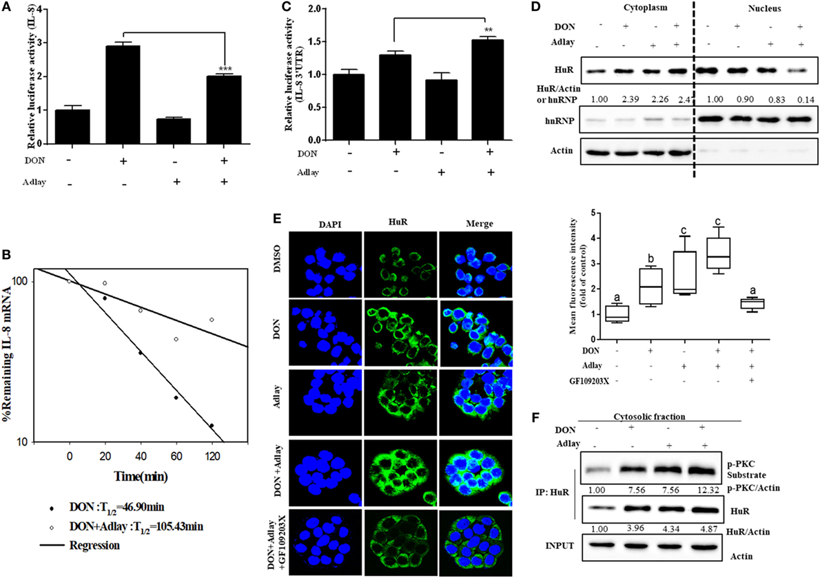 Frontiers | Fungal Deoxynivalenol-Induced Enterocyte Distress Is