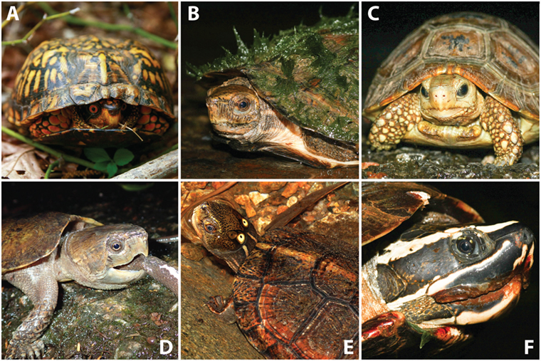 Figure 1 - Turtle diversity. Although all turtles have shells, the various species can look very different.