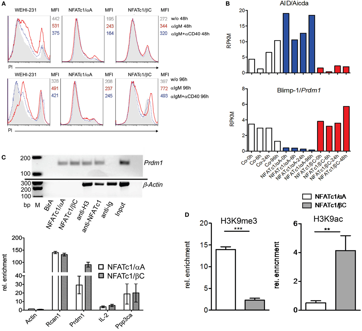 Frontiers   Induction of Short NFATc1/αA Isoform Interferes