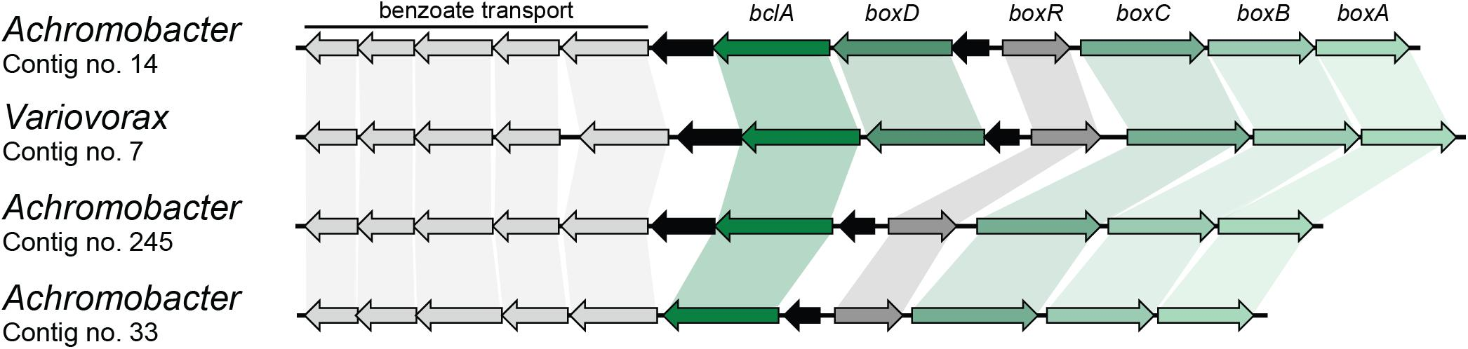 Frontiers | Metagenomic Analysis of a Biphenyl-Degrading