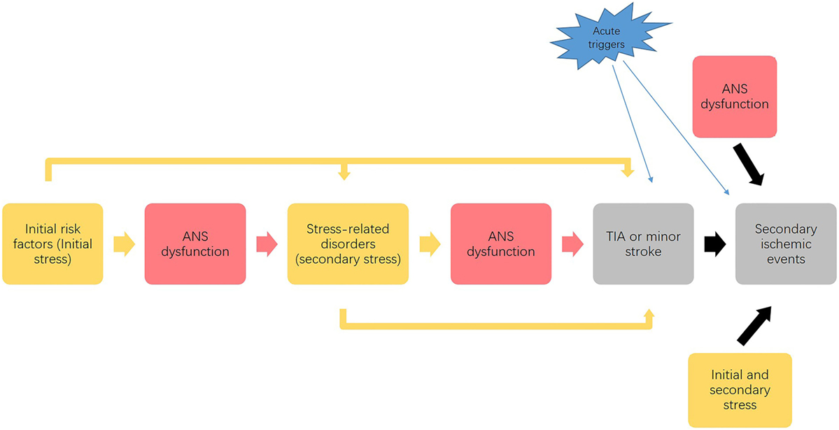 Frontiers | Autonomic Nervous System and Stress to Predict