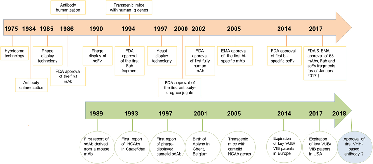 Frontiers | Camelid Single-Domain Antibodies: Historical