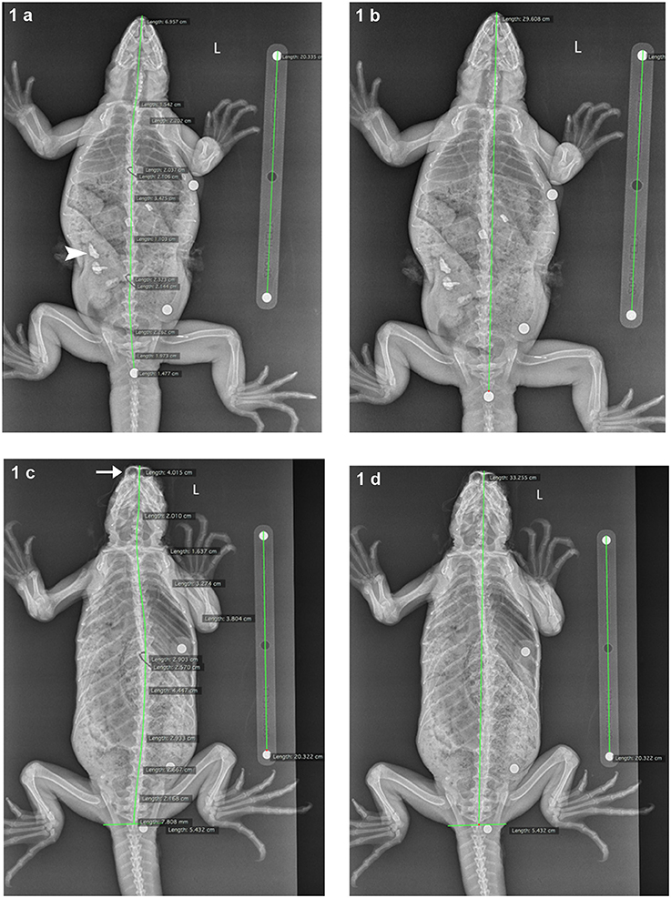 Frontiers | Field-Based Radiographic Imaging of Marine Megafauna ...
