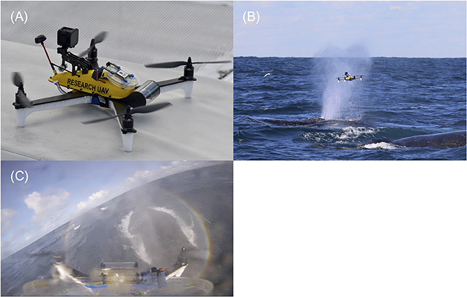 Frontiers | An Economical Custom-Built Drone for Assessing Whale