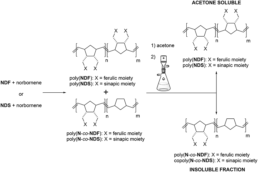 Frontiers biocatalytic synthesis and polymerization via romp of frontiersin publicscrutiny Image collections