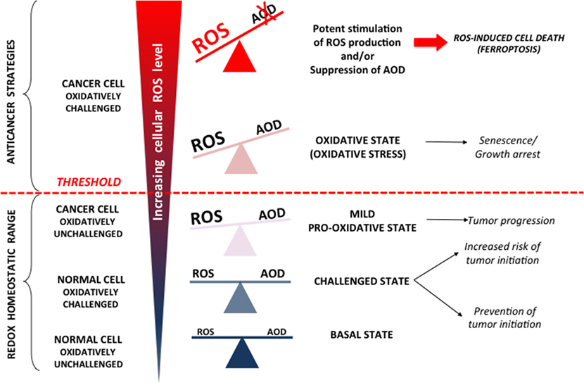 Frontiers | The Central Role of Amino Acids in Cancer Redox