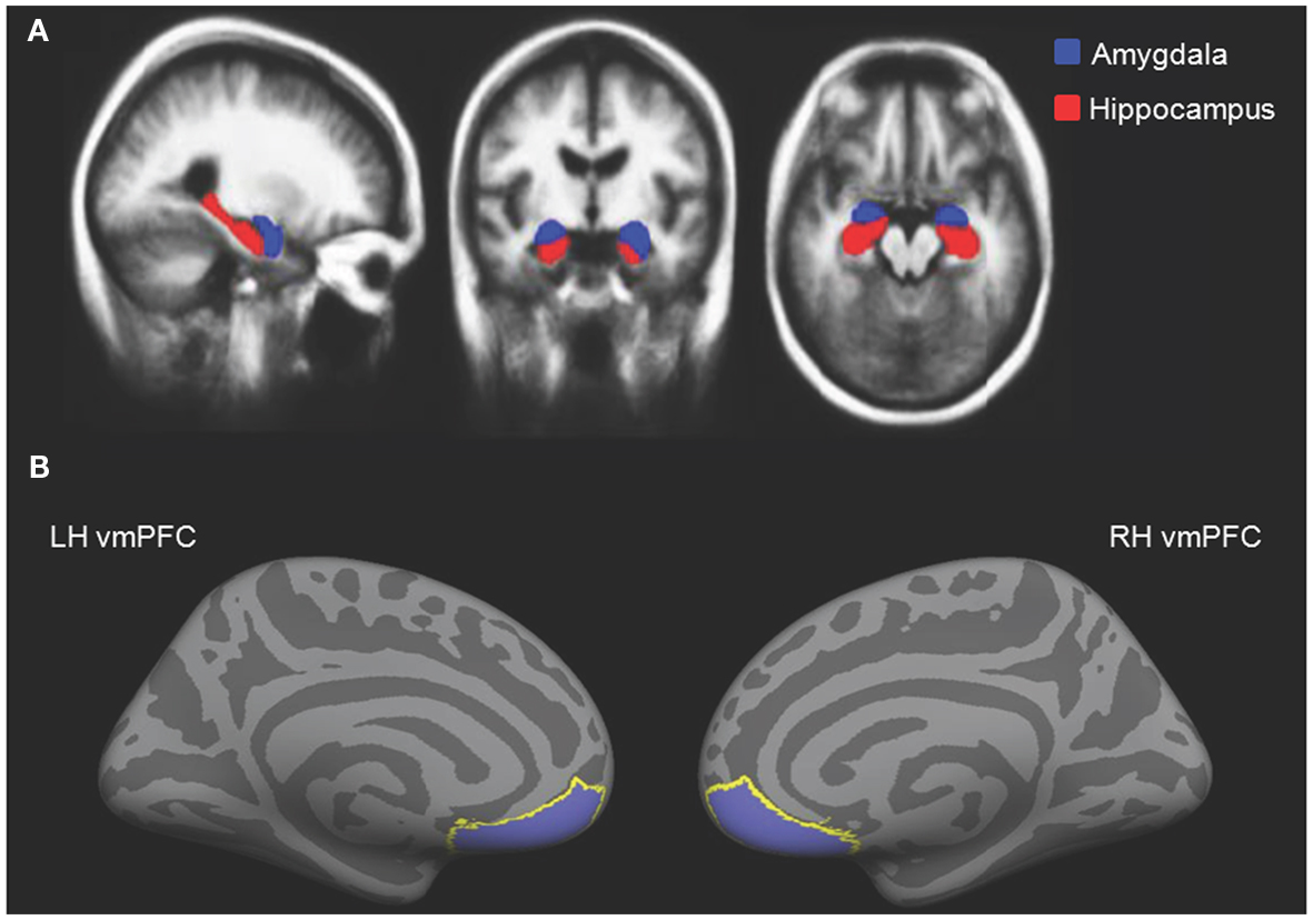 Frontiers Structural Variation Within The Amygdala And