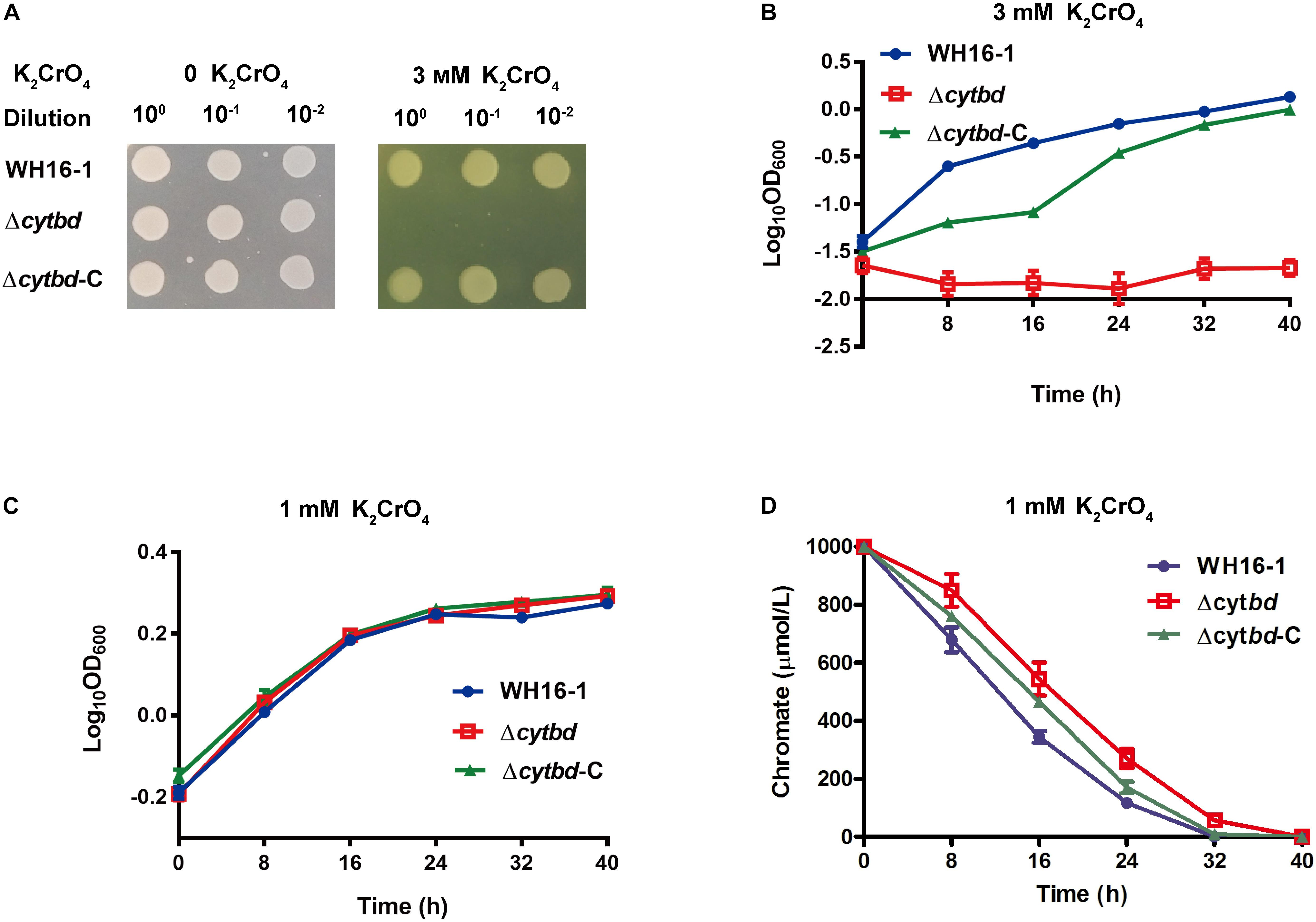 Frontiers The Cytochrome Bd Complex Is Essential For Chromate And Measurement Of Electrical Quantities With A Cro