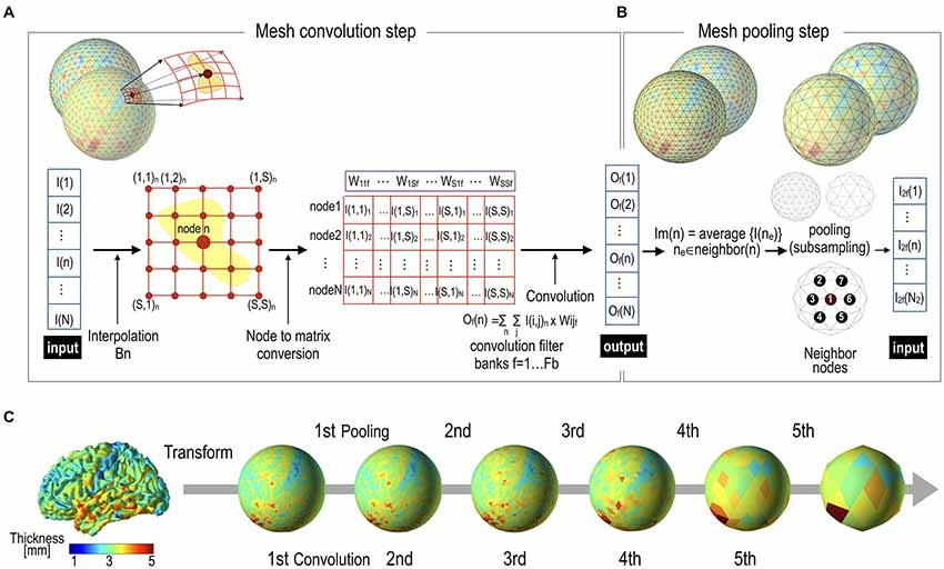 Frontiers | Geometric Convolutional Neural Network for