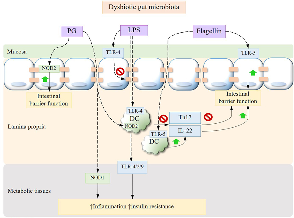 dysbiosis review)