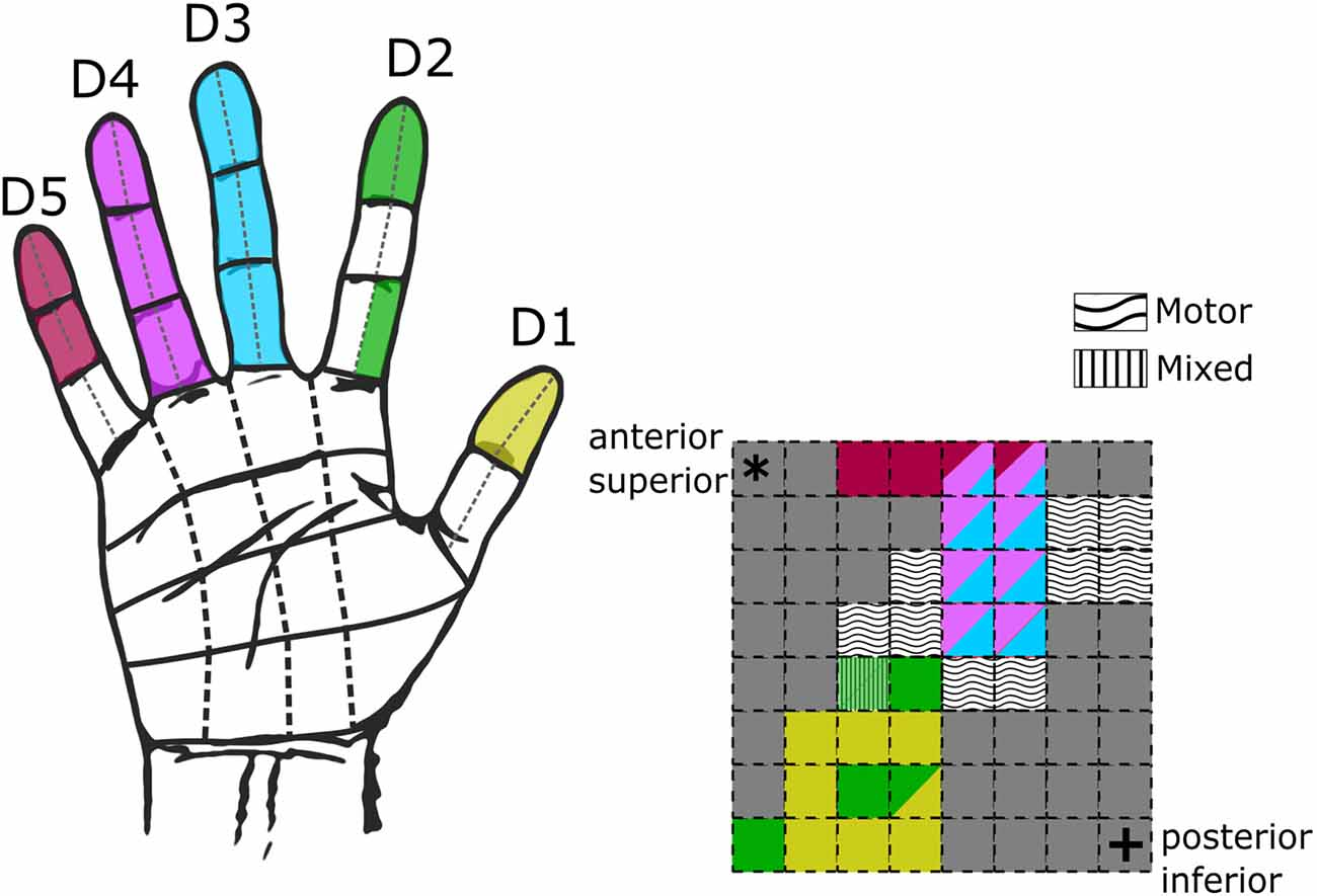 Frontiers Engineering Artificial Somatosensation Through Cortical Outlining Flex Circuits Integral Fingers Manufacturing Processes