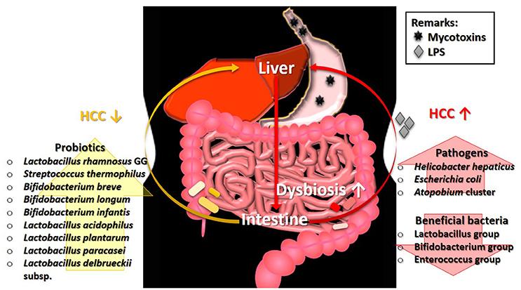 toxic buildup in gut)