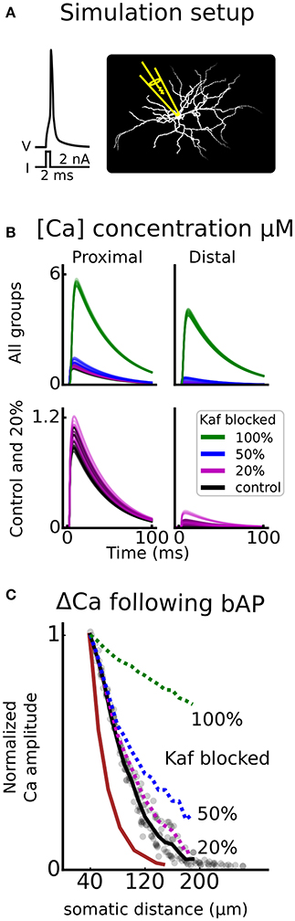 Frontiers basal ganglia neuromodulation over multiple temporal and frontiersin ccuart Gallery