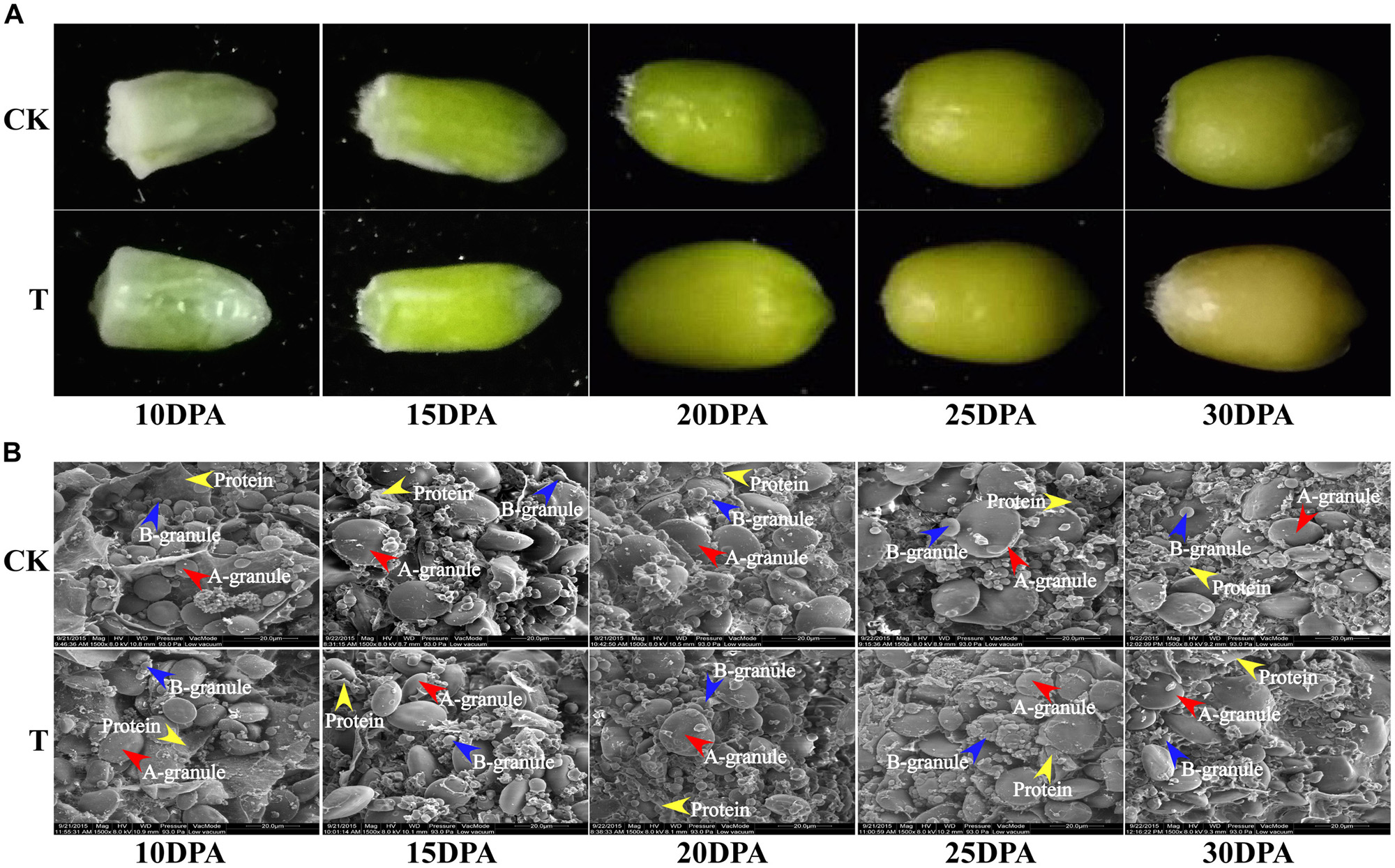 Frontiers | Comparative Proteome Analysis of Wheat Flag