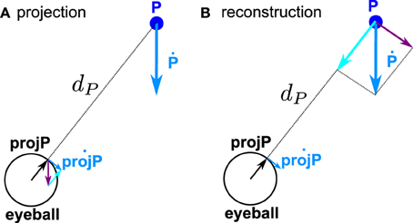Frontiers | 3D kinematics using dual quaternions: theory and