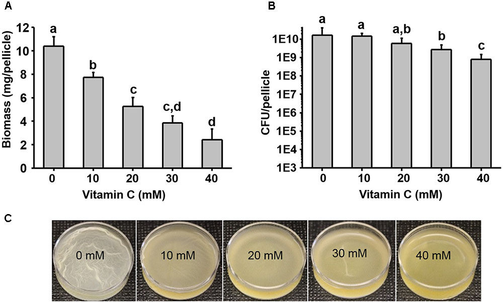 Frontiers | Low Concentrations of Vitamin C Reduce the