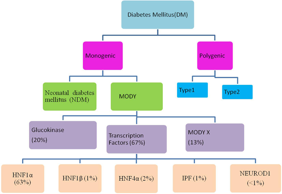 Mature onset diabetes mellitus