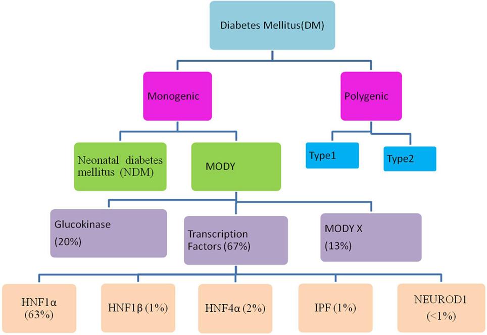 dieta de diabetes del gen pax4