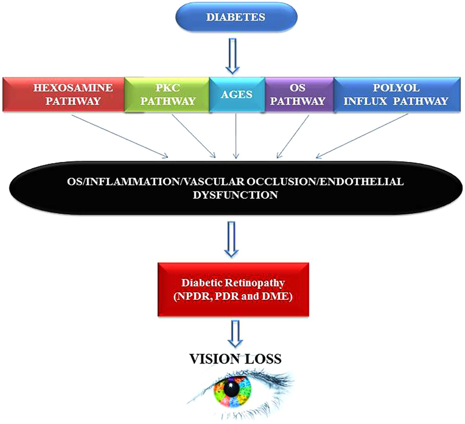 Frontiers | Remodeling of Retinal Architecture in Diabetic