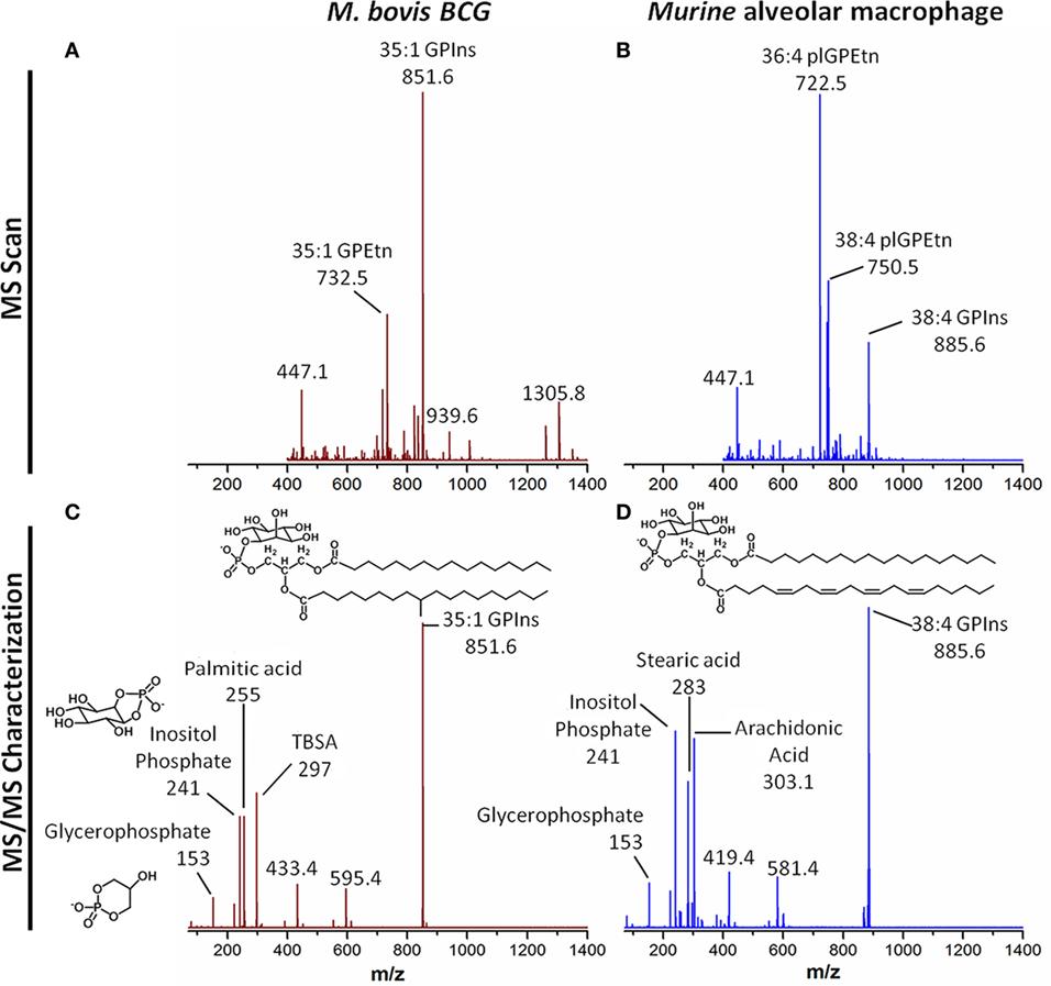 Frontiers Macrophagebacteria Interactionsa Lipid Centric Nuno Bettencourt Wiring Diagram