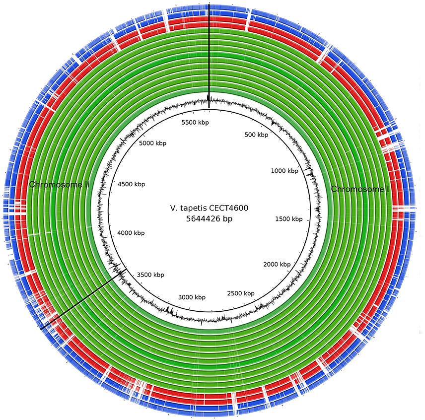 Frontiers | Vibrio tapetis Displays an Original Type IV