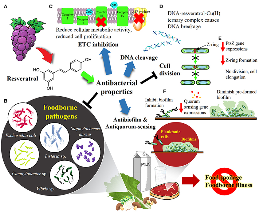Frontiers Resveratrol Potential Antibacterial Agent Against Foodborne Pathogens Pharmacology