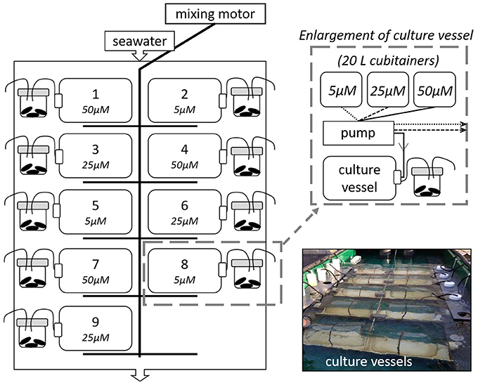 Frontiers | Carbon Stable Isotope Values in Plankton and Mussels
