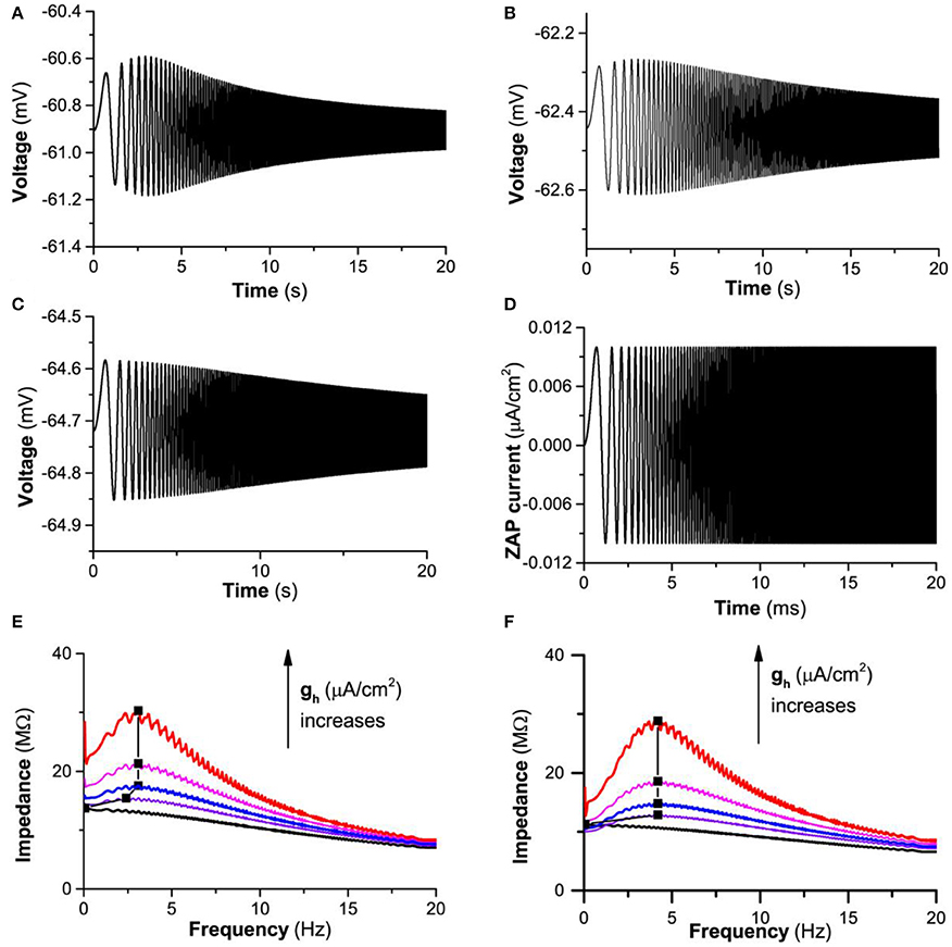 Frontiers | Dynamical Mechanism of Hyperpolarization