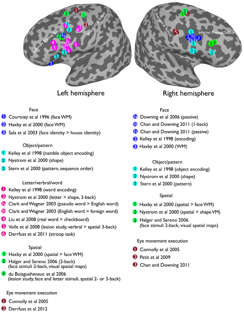 The role of the prefrontal cortex on executive functions