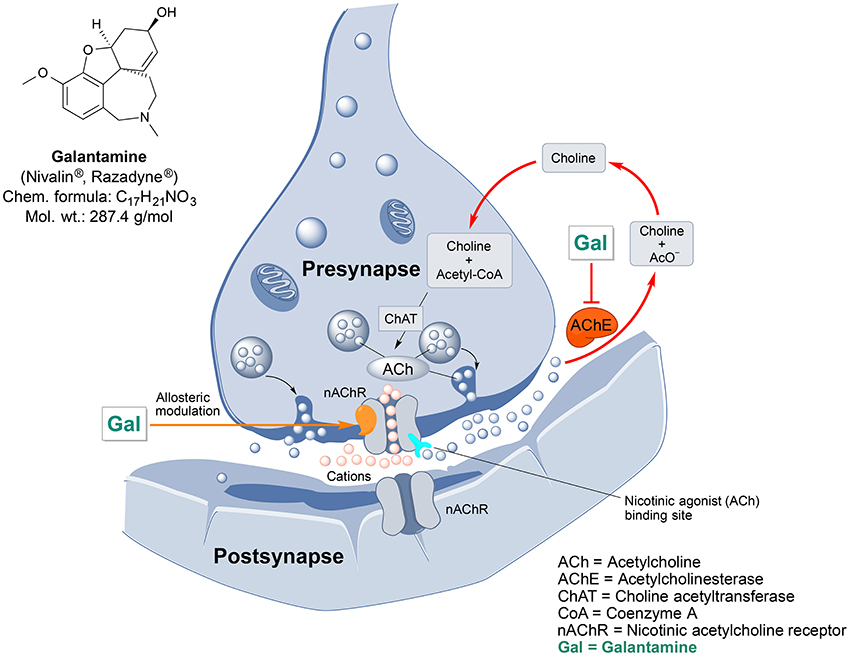 Frontiers | Ethnopharmacological Approaches for Dementia