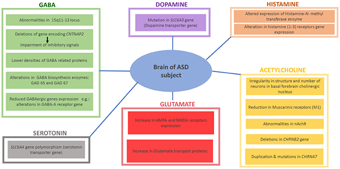 Decoding Overlap Between Autism And Adhd >> Frontiers Current Enlightenment About Etiology And Pharmacological