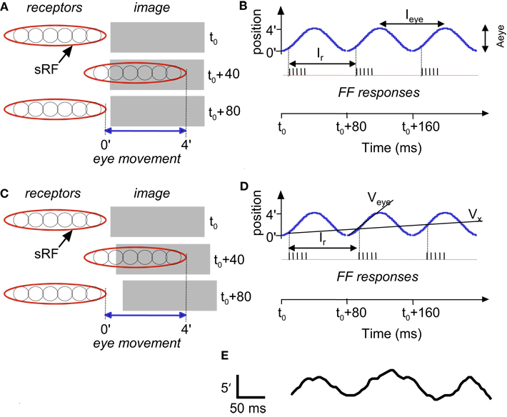 Eye Movements Reveal Temporal >> Frontiers Seeing Via Miniature Eye Movements A Dynamic Hypothesis