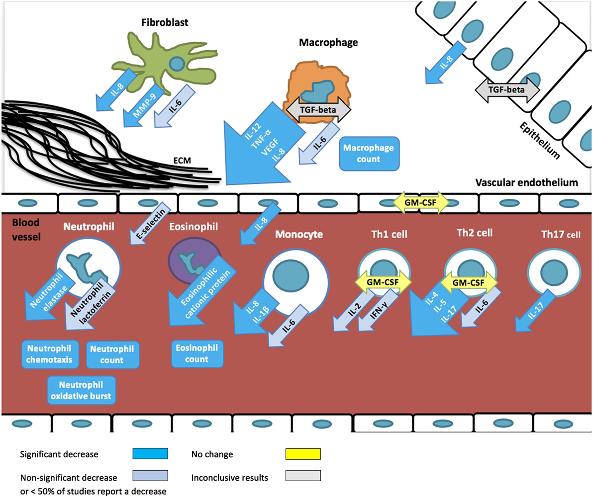 Frontiers | The Immunomodulatory Effects of Macrolides—A Systematic