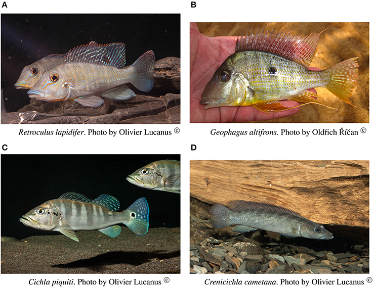 Frontiers Remarkable Geographic Structuring Of Rheophilic Fishes