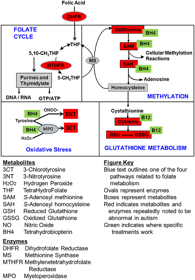 Frontiers | Comparison of Treatment for Metabolic Disorders