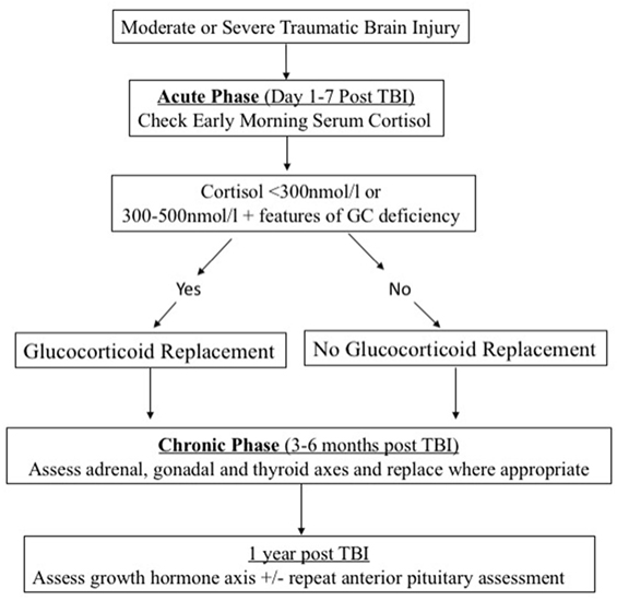 Stress Test Algorithm: Post-Traumatic Hypopituitarism—Who Should Be