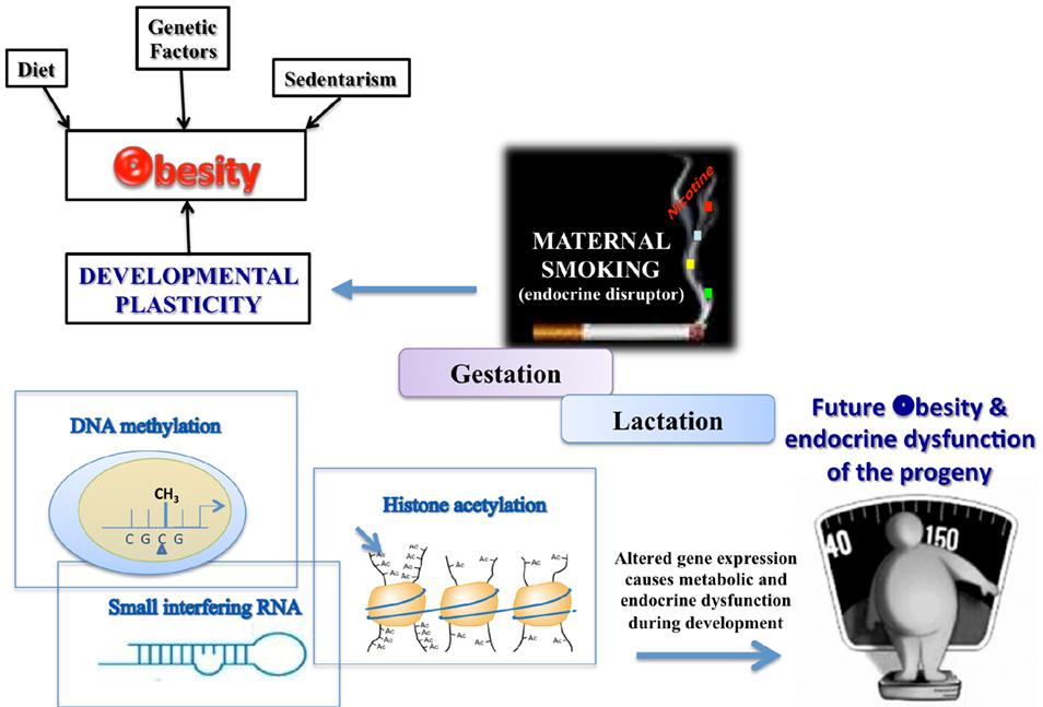 Epigenetic Mechanisms in Inflammation