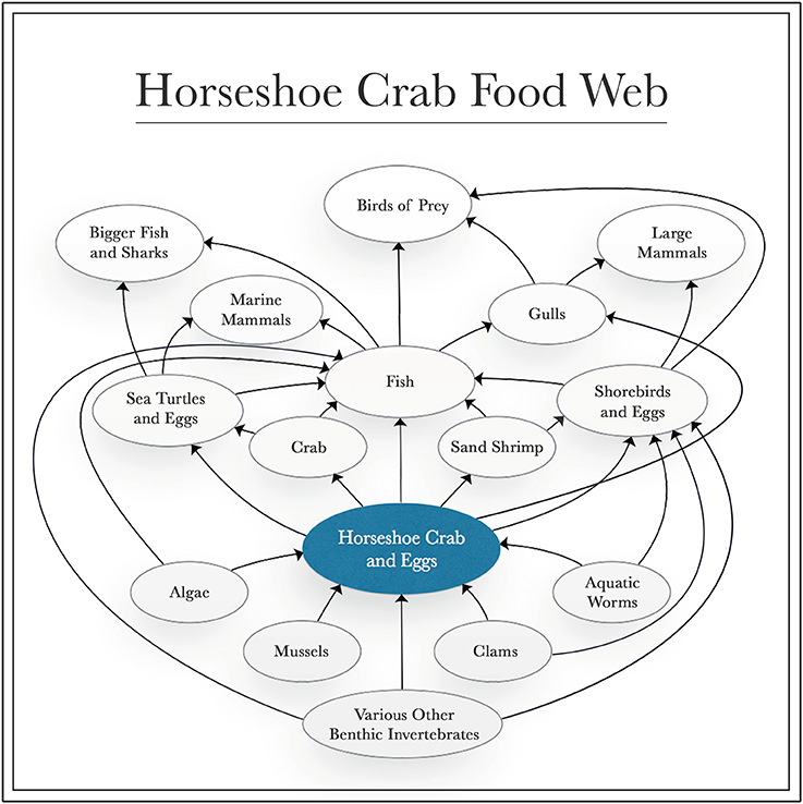 Frontiers | The Role of Horseshoe Crabs in the Biomedical Industry ...