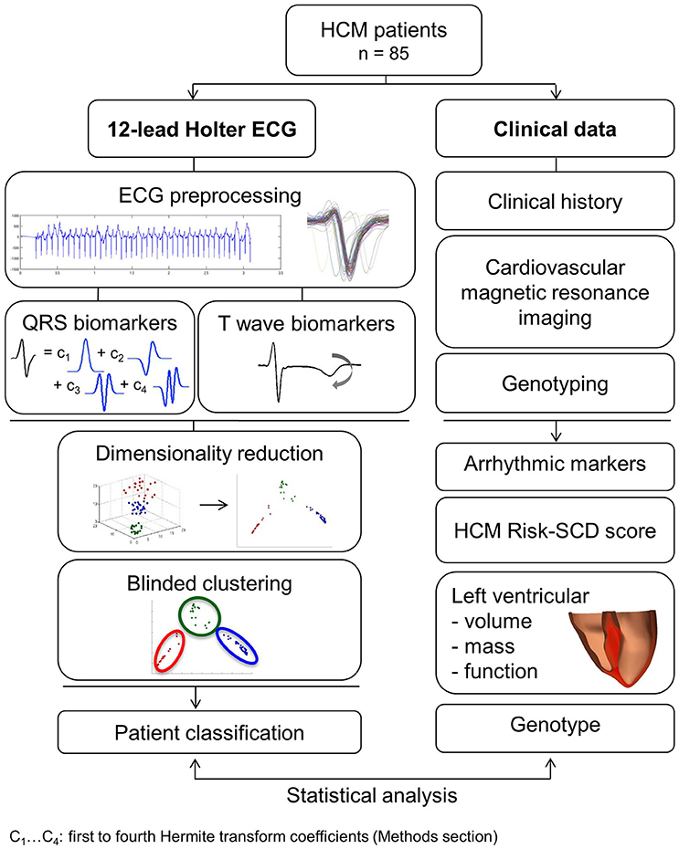 Frontiers | Distinct ECG Phenotypes Identified in