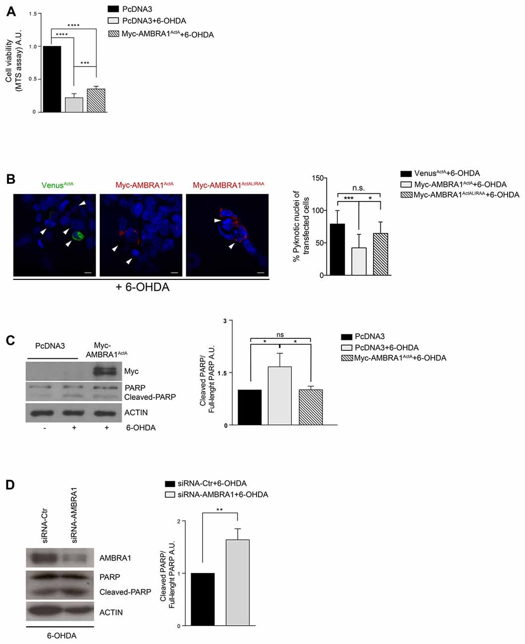 oxidative stress <strong>and</strong> apoptosis induced by neurotoxicity in human
