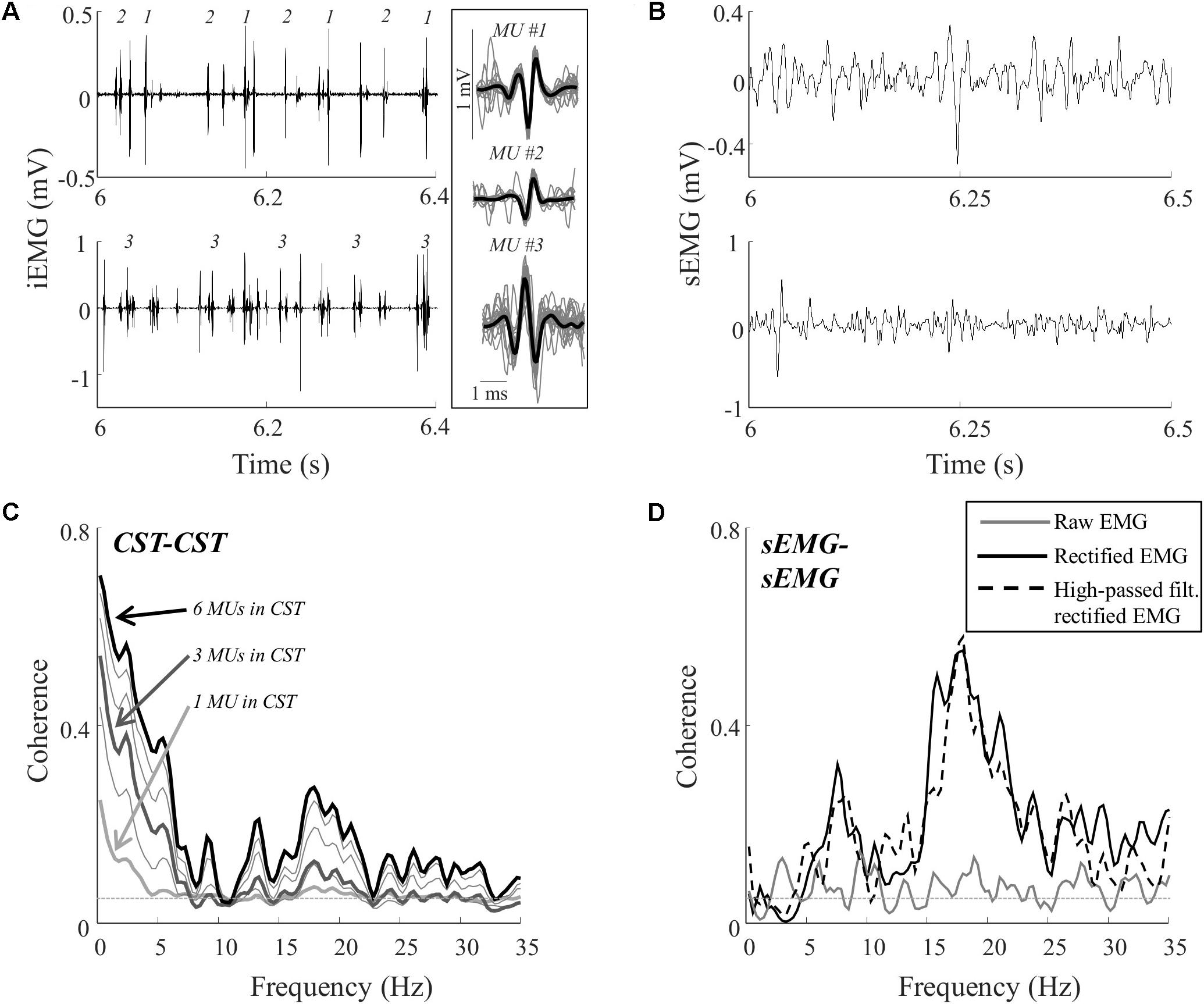 Frontiers Coherence Of The Surface Emg And Common Synaptic Input Figure 9 Block Diagram Signal Via Human Finger After Applying