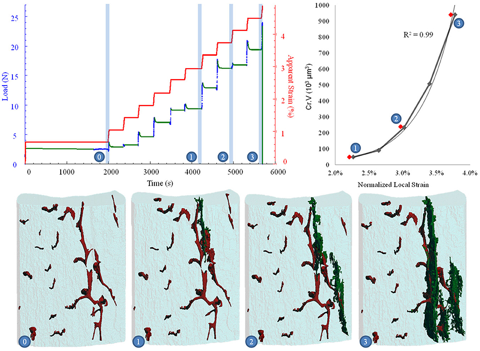 Frontiers   An Automated Step-Wise Micro-Compression Device for 3D