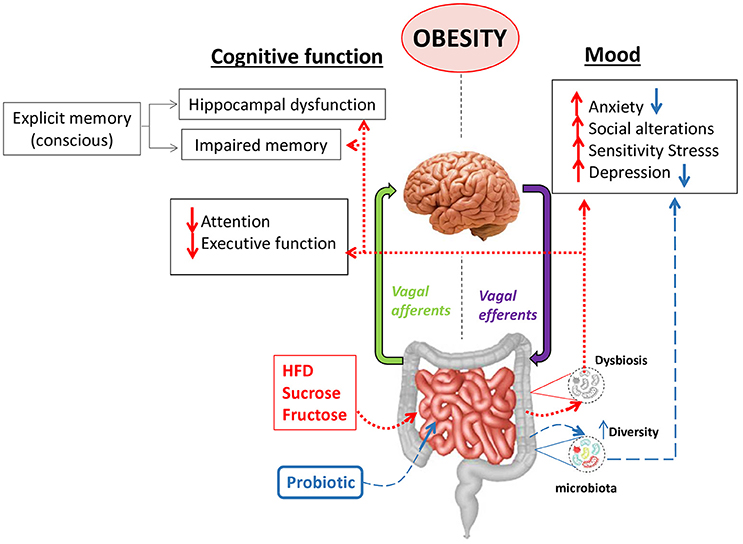 Frontiers Interplay Between The Gut Brain Axis Obesity And