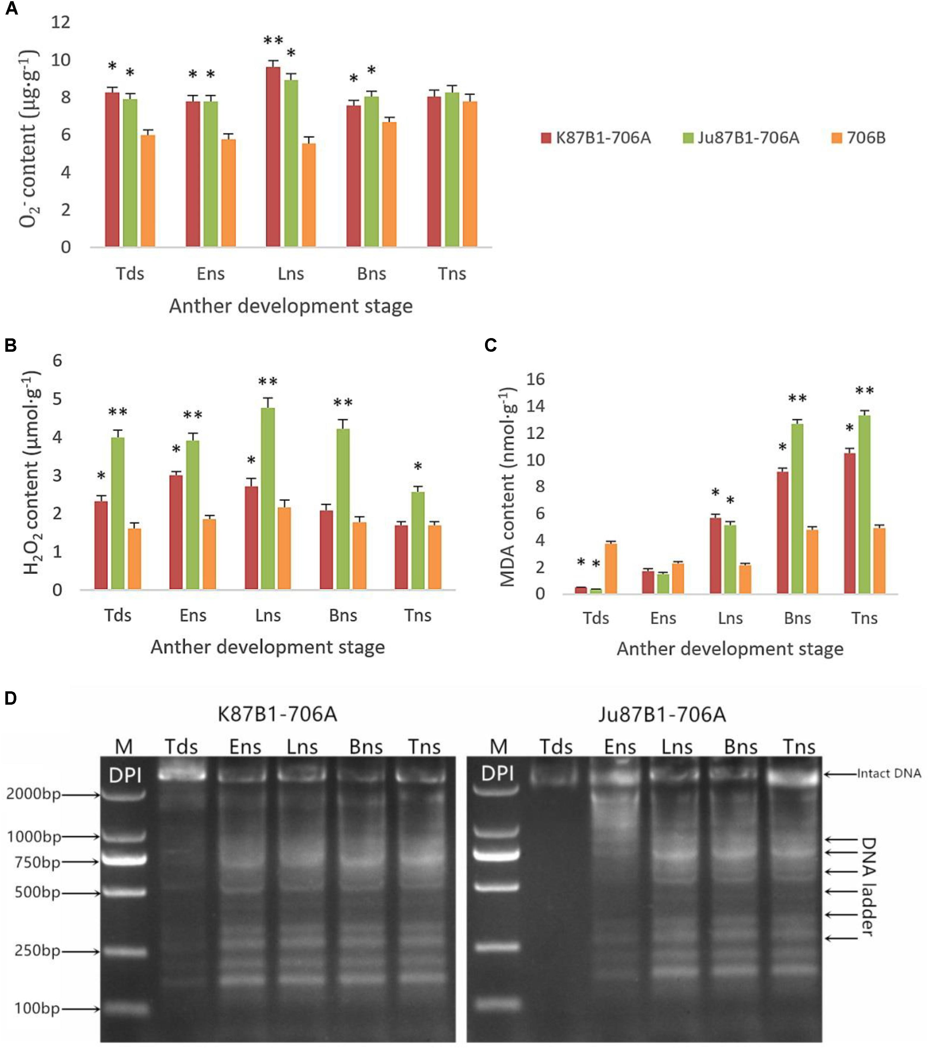 Anther Ladder frontiers   oxidative stress and aberrant programmed cell