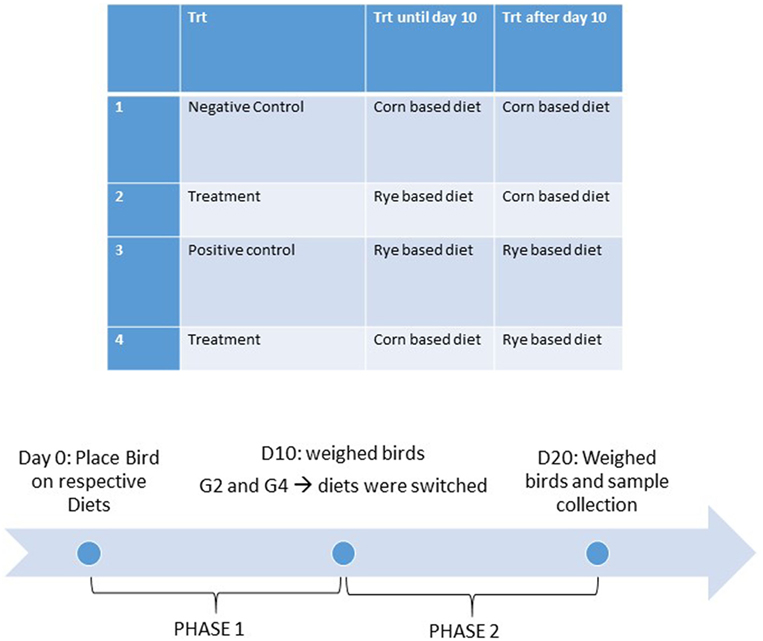 Frontiers | Assessment of a Nutritional Rehabilitation Model in Two
