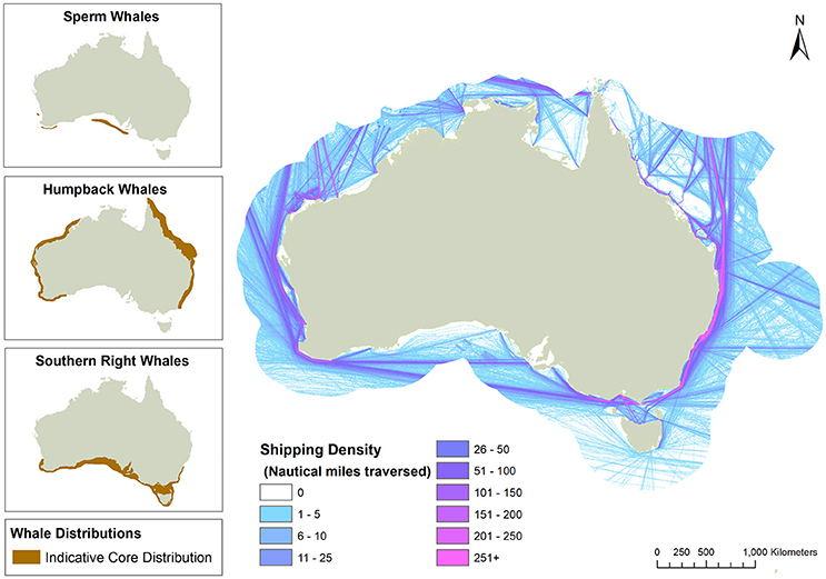Frontiers   Vessel Strike of Whales in Australia: The Challenges of on bird migration route maps, manatee migration route maps, hummingbird migration route maps, killer whale migration route washington, killer whales orcas migration routes, humpback whale migration route maps, great white shark migration pattern maps, killer whales migrating path, killer worm harness walleye,