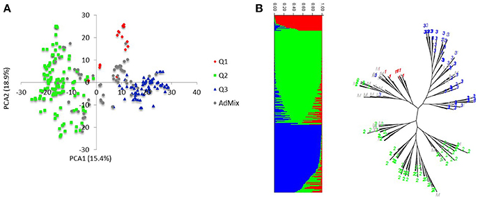 Frontiers | Genome Wide Association Mapping of Seedling and